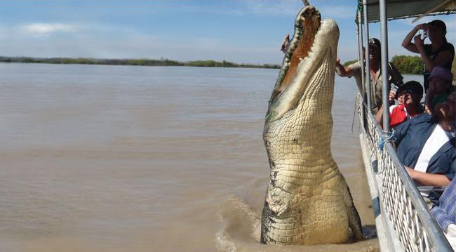 brutus el cocodrilo gigante, adeliade river cruises, estudiar en australia, australian way, estudia y trabaja en australia,  estudiaenaustralia.es, estudia en australia2